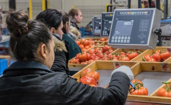 DTS-V at Schenkeveld Tomatoes